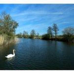 white-swan-norfolk-broads-1.jpeg